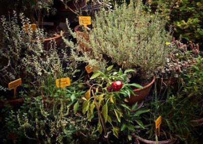 herbs corner